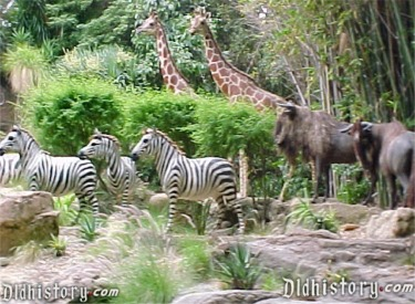 Giraffes, Zebras and Gnus In African Veldt