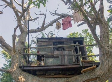 Tree House With Laundry