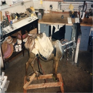 Donkey In Shop For Service