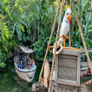 Cockatoo Rosita Sits On The Dock Overlooking Jungle Cruise