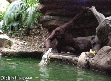 Gorilla Playing With Crocodile