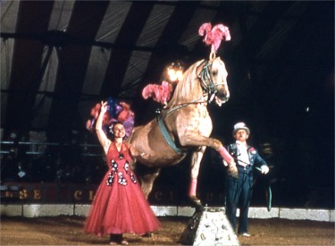 Serenado The Musical Horse, Dances And Plays Chimes