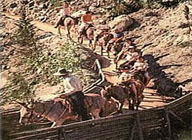 Pack Mules On Trail