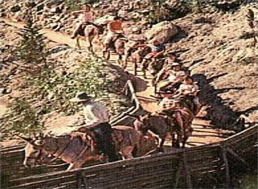 Pack Mules On The Trail