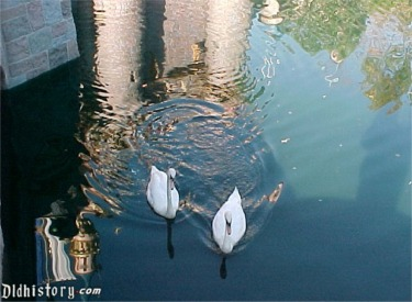 Swans In Castle Moat