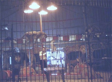 Keller In Cage With Lions And Tigers