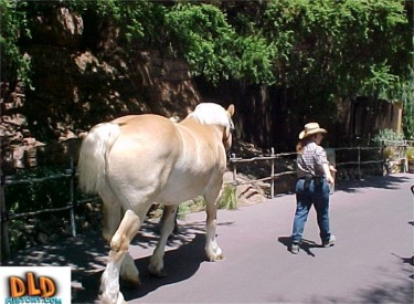 Horse Passing Through Frontierland