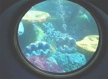 View Out Of Porthole Of Shellfish